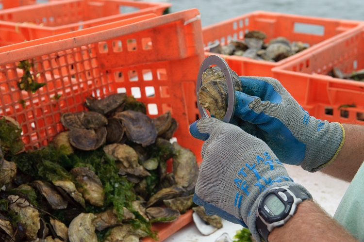 Island Creek Oysters Farmers