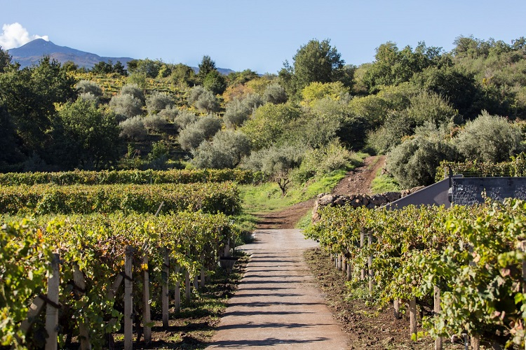 Discover Mt. Etna's Volcanic Wines