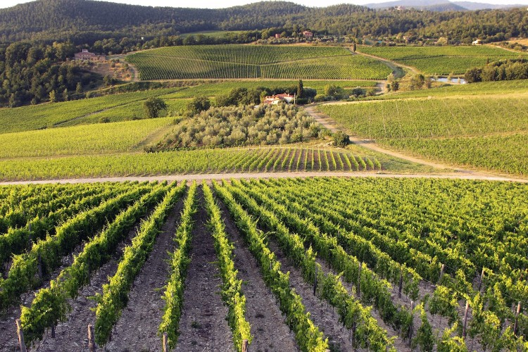 Taste the Wines of Frescobaldi