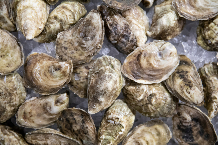 Oyster Day at Eataly Los Angeles