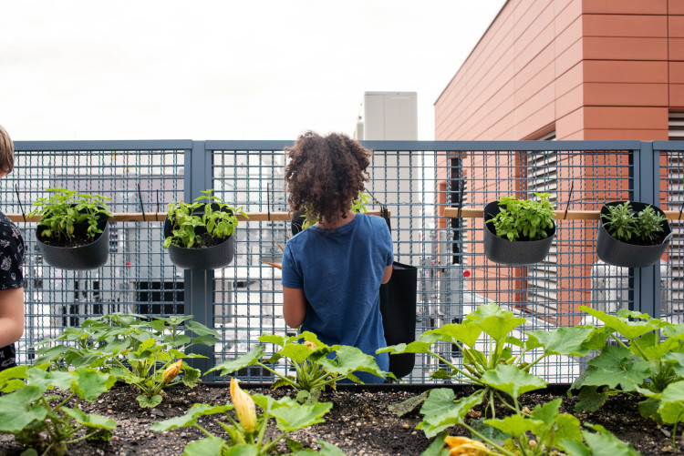 Child growing vegatables with GrowNYC and Eataly Flatiron